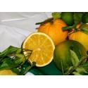 Citrange morton  Citroncirus -Poncirus trifoliata X Citrus sinensis