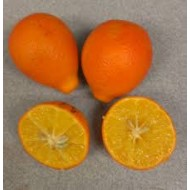 Orangequat  Citrus unshiu X Fortunella margarita
