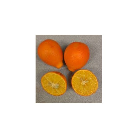 Citronnier épineux, Oranger trifolier Poncirus trifoliata