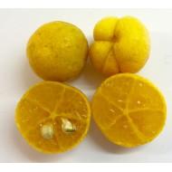 Eremorange citron caviar Eremocitrus x Citrus sinensis